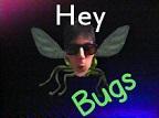 frontfly